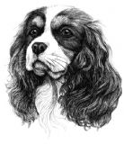 Cavalier King Charles Puppy Receipt Book
